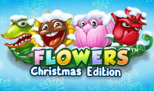 christmasflower